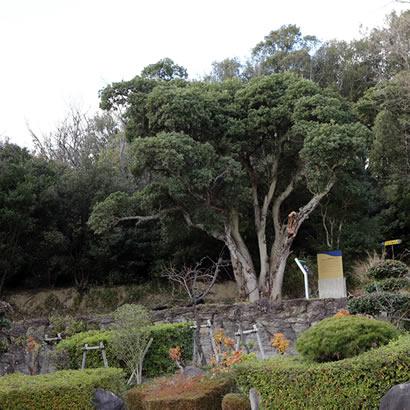 冈之谷一号坟 被静静地安放于略微隆起的小丘上